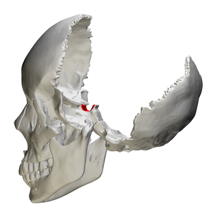 Sella turcica - Human skull seen from side (parietal bones and temporal bones have been removed). Sella turcica shown in red.