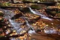 Seneca-waterfalls-3 ForestWander.jpg