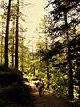 Sentiero - panoramio (1).jpg