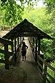 Sentinel Pine Bridge (3372213960).jpg