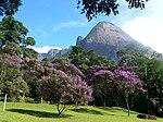 Atlas Ormanları, Brezilya