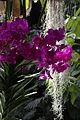 Serres-Jardin-Plantes-Paris 17 epiphytes.JPG