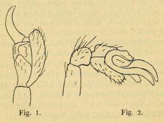 <i>Seycellesa</i> genus of arachnids