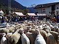 Sheep shearing in Savognin.jpg