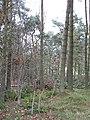 Shiels Wood - geograph.org.uk - 273099.jpg