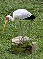 Singapore Bird Park-23and (2927544603).jpg