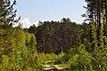 Skulyn Kovelskyi Volynska-Voloha sudibrova nature monument-general view-1.jpg