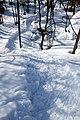 Snowshoeroute.jpg