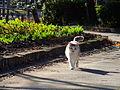 Sodegaura park-Chiba 袖ヶ浦公園-DSCF7175.JPG