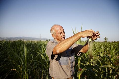 South African farmer in Georgia