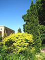 St.Petersburg Botanical Garden 01.JPG