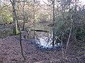 Stagnant pool south of Bushycommon Wood - geograph.org.uk - 1704158.jpg