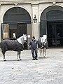 Stallions at Stallburg Spanish Riding School 13.jpg
