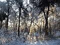 Stappersven in sneeuw 07.JPG