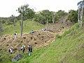 Starr-051029-8358-Charpentiera obovata-habitat and planting-Auwahi-Maui (24731129432).jpg