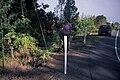 Starr 990818-3621 Lonicera japonica.jpg