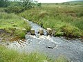 Stepping Stones - geograph.org.uk - 481621.jpg