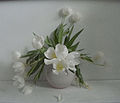 Stervende tulpen 4.jpg