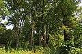 Stieleichengruppe Sankt Michael im Burgenland.JPG