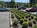 Stormwater treatment basin Sumner WA.jpg