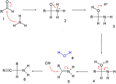 Strecker synthesis part I