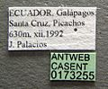 Strumigenys louisianae casent0173255 label 1.jpg
