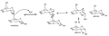 Sucrase-Isomaltase Mechanism.png