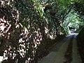 Sunken lane, Sigdon - geograph.org.uk - 228710.jpg