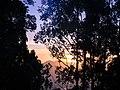Sunrise at Munnar.jpg
