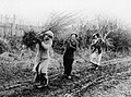 THE WOMEN'S WORK IN AGRICULTURE, 1914-1918 Q108483.jpg