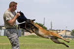TSG Shawn Rankins and working dog Eespn demonstrate aggression training.png