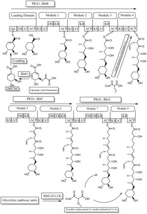 Tacrolimus biosynthesis part 1.tif