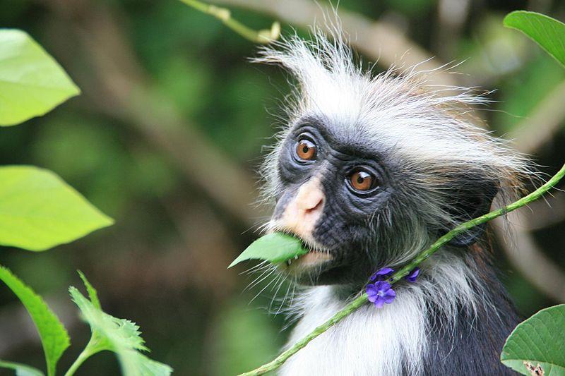 File:Tanzania - Zanzibar.jpg