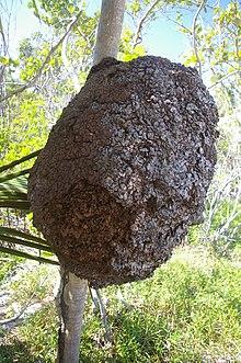 220px-Termite-nest-Tulum-Mexico dans FOURMI