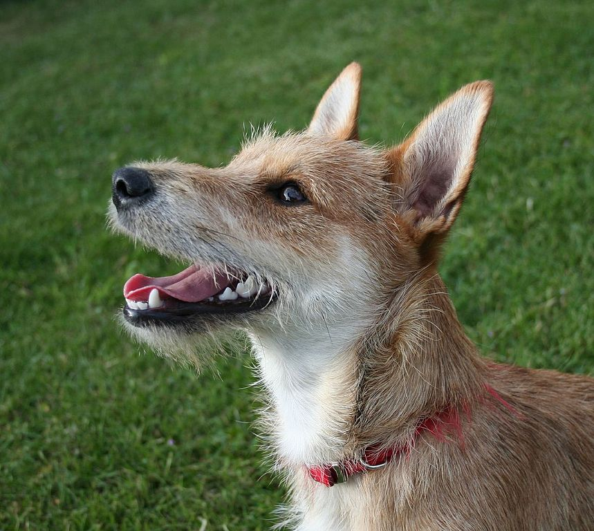Mixed Breeds Of Dogs Best