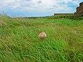 Texel - Zanddijk - De Slufter - Supersize Mushrooms II.jpg