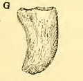 The Osteology of the Reptiles-193 uhyg hg kjh jhb jhgb hgv jhgv hgv uhyg hg rt.png