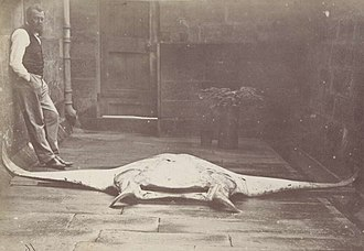 Gerard Krefft - Krefft with a reef manta ray, a species he described in 1868