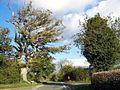 The Tree, Cross Of The Tree - geograph.org.uk - 589442.jpg