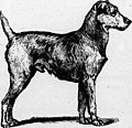 The dog in health and in disease (microform) - including his origin, history, varieties, breeding, education and general management in health, and his treatment in disease (1895) (20607219606).jpg