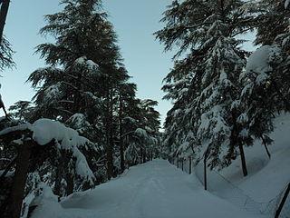 Théniet El Had National Park national park