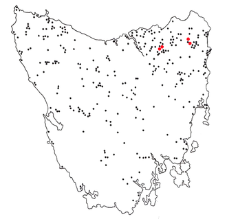 Map showing location of reported sightings between 1936 and 1980 in Tasmania. Black = 1 reported sighting, red = 5 reported sightings. Thylacine sightings Tasmania.png