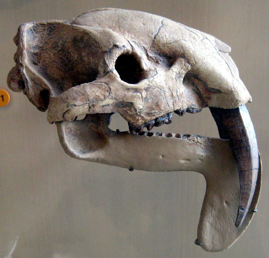 Dinosaur Hoax - Dinosaurs Never Existed! 939px-Thylacosmilus_Atrox