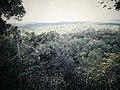 Tikal Jungle (9791162224).jpg
