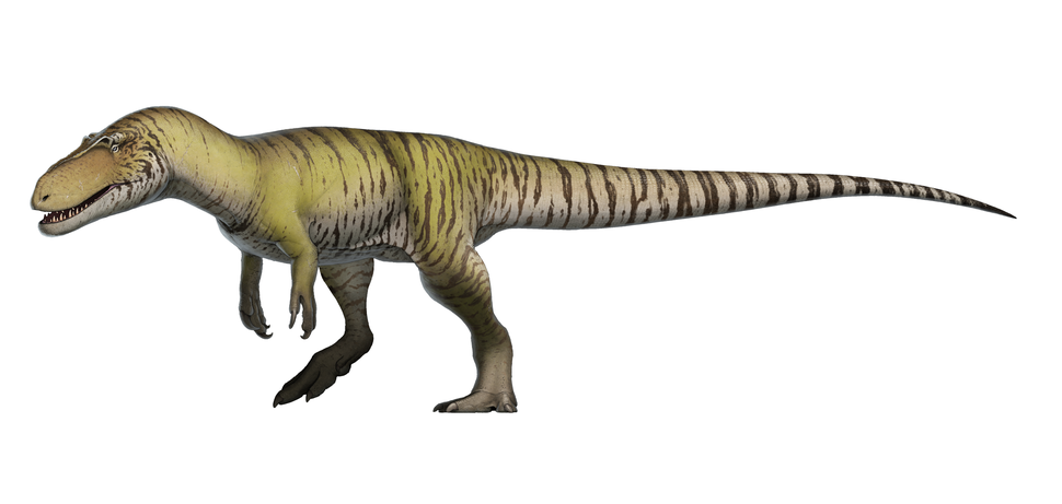 Torvosaurus tanneri Reconstruction