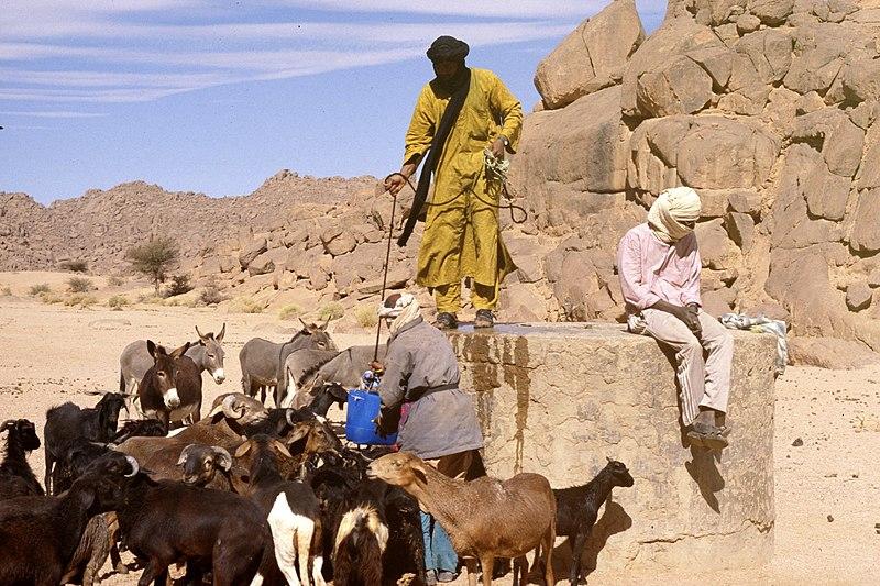 Targui - Touareg - Sahara - Désert - Élevage - Nomade - Peuple - Sable - SchoolMouv - Géographie - CM2