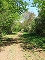 Track, Friston Forest - geograph.org.uk - 1272311.jpg