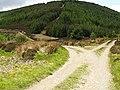Track Junction, Blackhouse Forest - geograph.org.uk - 447685.jpg