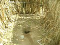 Traditional pit latrine in North Kamenya, Kenya.jpg