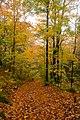 Trail (1538928739).jpg